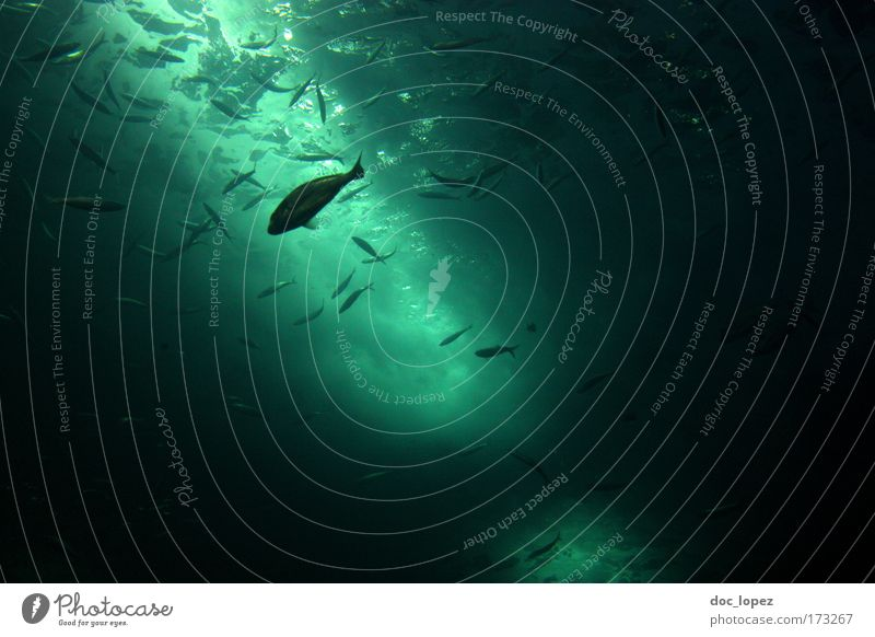 Nature Green Beautiful Ocean Calm Black Life Cold Freedom Lake Swimming & Bathing Speed Fish River North Sea Dive