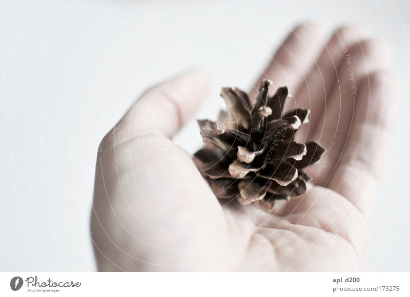 sperm donor Colour photo Interior shot Close-up Detail Copy Space left Neutral Background Day Light Shallow depth of field Human being Hand 1 Nature Tree