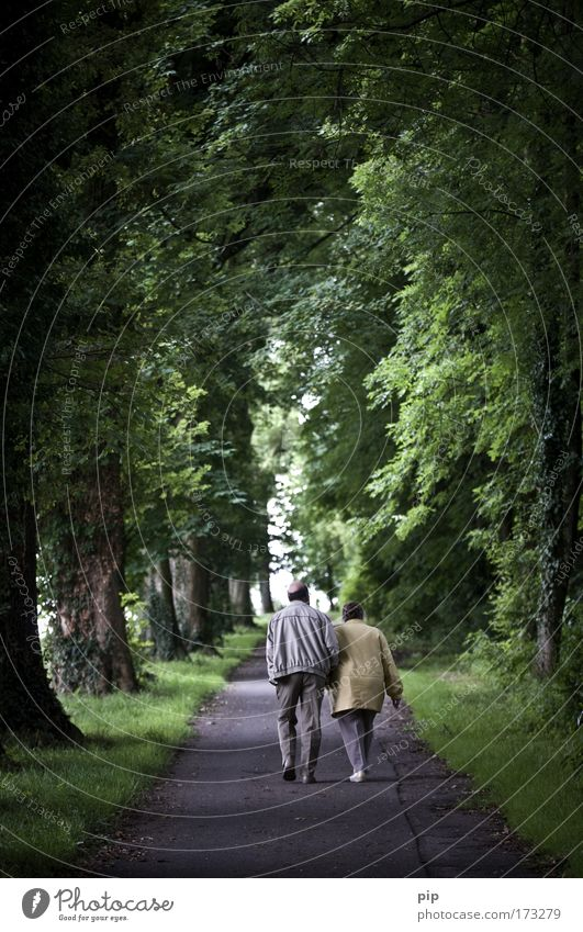 Human being Nature Tree Summer Forest Family & Relations Senior citizen Happy Lanes & trails Park Couple Together Going Romance To go for a walk Trust