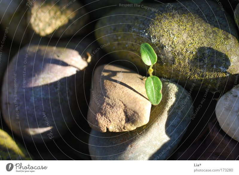 Plant Loneliness Life Relaxation Stone Environment Beginning Hope New Growth Future Environmental protection Sustainability Decent Resist Habitat