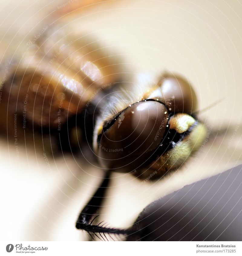 Nature Calm Animal Life Head Legs Environment Near Soft Insect Feeler Dragonfly Fascinating Interesting Compound eye