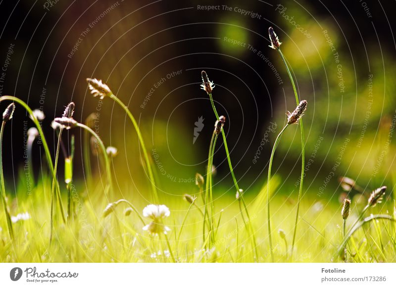 ... and clover Colour photo Exterior shot Day Environment Nature Landscape Plant Earth Air Beautiful weather Grass Leaf Foliage plant Wild plant Meadow Field
