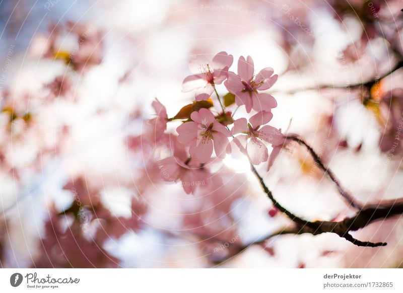 Nature Vacation & Travel Plant Tree Landscape Animal Joy Forest Environment Blossom Spring Happy Garden Tourism Pink Park