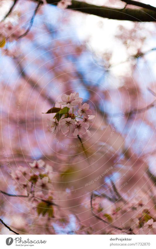 Sky Nature Vacation & Travel Plant Tree Landscape Joy Environment Blossom Spring Happy Garden Freedom Tourism Pink Park