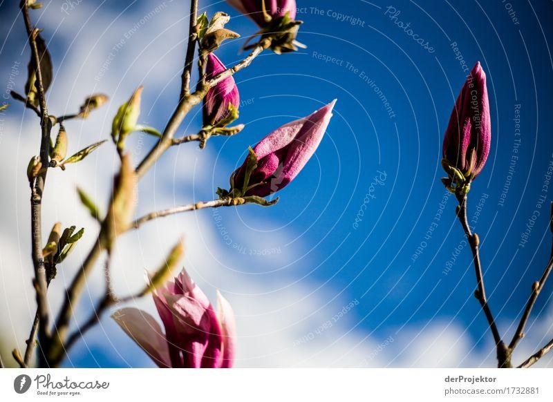 Sky Nature Vacation & Travel Plant Blue Tree Landscape Joy Environment Blossom Spring Happy Garden Freedom Tourism Pink