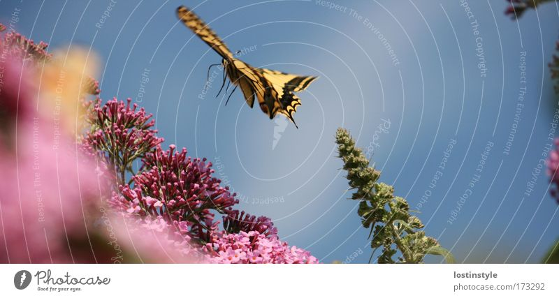 Nature Plant Summer Animal Flying Wing Delicate Butterfly Smooth Ease Judder Swallowtail