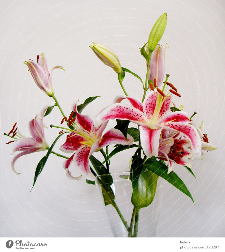 lily birthday bouquet Colour photo Interior shot Close-up Deserted Neutral Background Contrast Central perspective Elegant Design Relaxation Spa Lounge Plant