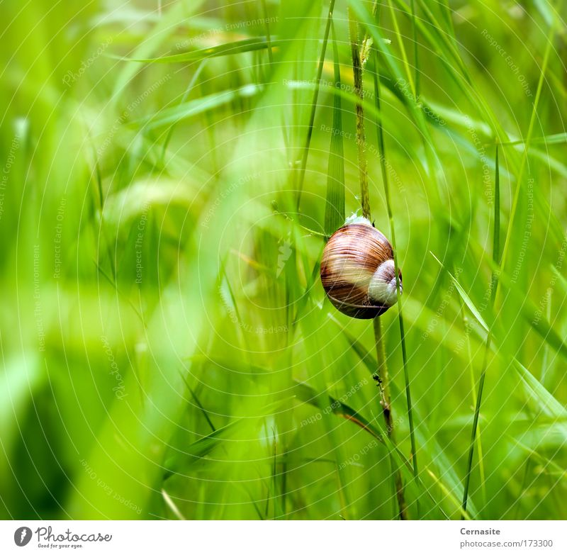 Deep Within Nature Green Beautiful Plant Summer Animal Environment Yellow Meadow Warmth Grass Bright Brown Earth Field Wild