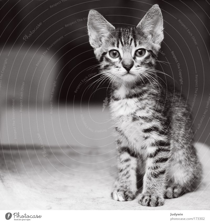 Cat Nature Beautiful Animal Life Baby animal Infancy Growth Cool (slang) Cute Observe Curiosity Brave Watchfulness Pet Paw
