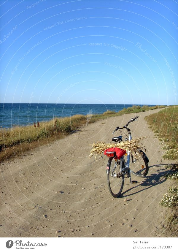 bicycle tour Colour photo Exterior shot Day Bird's-eye view Vacation & Travel Summer vacation Landscape Driving Joy Serene