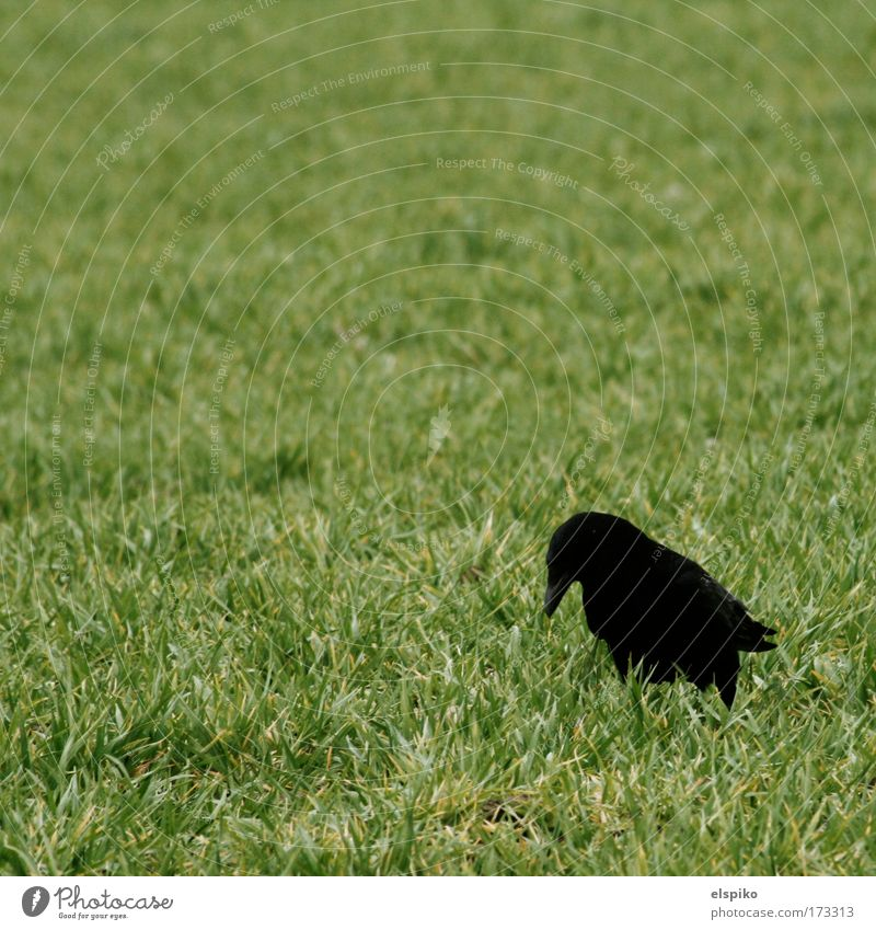 Nature Grass Landscape Bird Stand Feather Beak