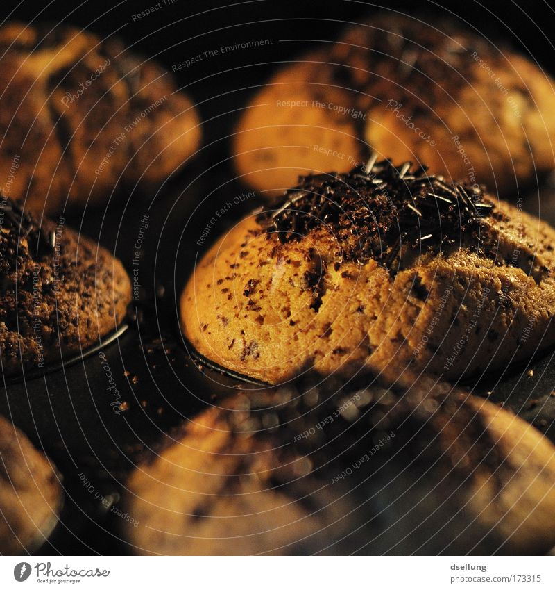 Watching muffins being baked with chocolate sprinkles Colour photo Interior shot Close-up Deserted Artificial light Contrast Shallow depth of field