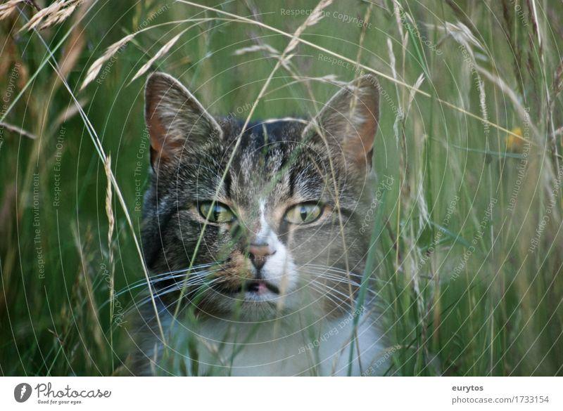 Cat Nature Plant Beautiful Green Landscape Animal Environment Life Meadow Natural Grass Garden Park Weather Field