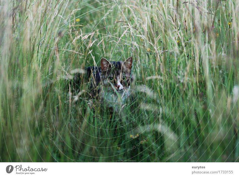 wildcat Environment Nature Landscape Plant Animal Climate Climate change Garden Park Meadow Pet Wild animal Cat 1 Observe Happy Loyalty Animal protection