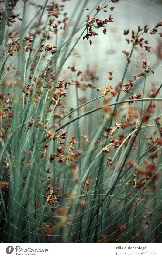 Nature Green Blue Grass Park Lakeside