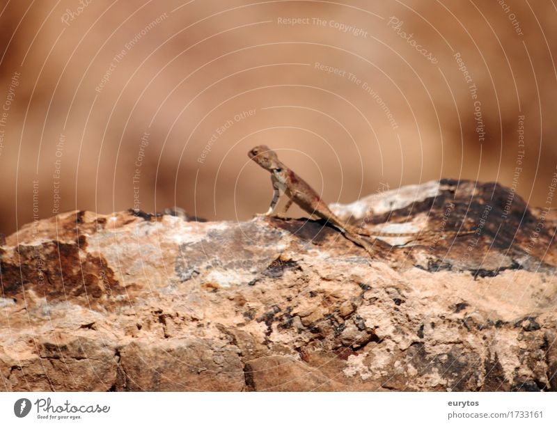 lizard Environment Nature Animal Sun Summer Wild animal 1 Brown Environmental protection Camouflage Saurians Colour photo Exterior shot Close-up Copy Space top