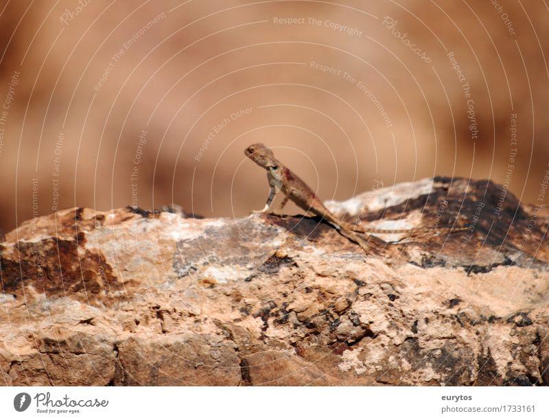 Nature Summer Sun Animal Environment Brown Wild animal Environmental protection Camouflage Saurians
