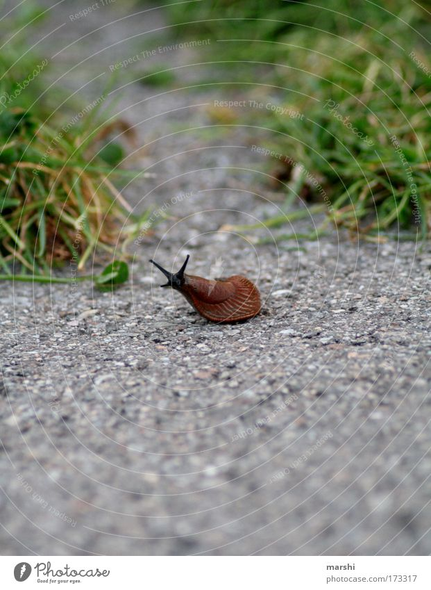 back on the racetrack... Colour photo Exterior shot Environment Nature Earth Park Meadow Transport Animal Snail 1 Movement Disgust Small Slimy Brown Green
