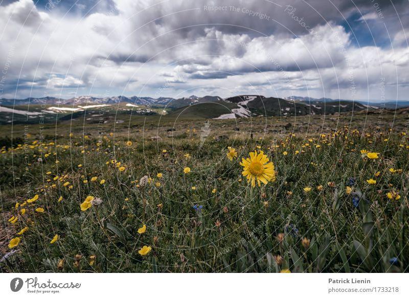 Alpen Sonnenblume Lifestyle Beautiful Vacation & Travel Tourism Adventure Summer Mountain Environment Nature Landscape Sky Clouds Climate Climate change Weather