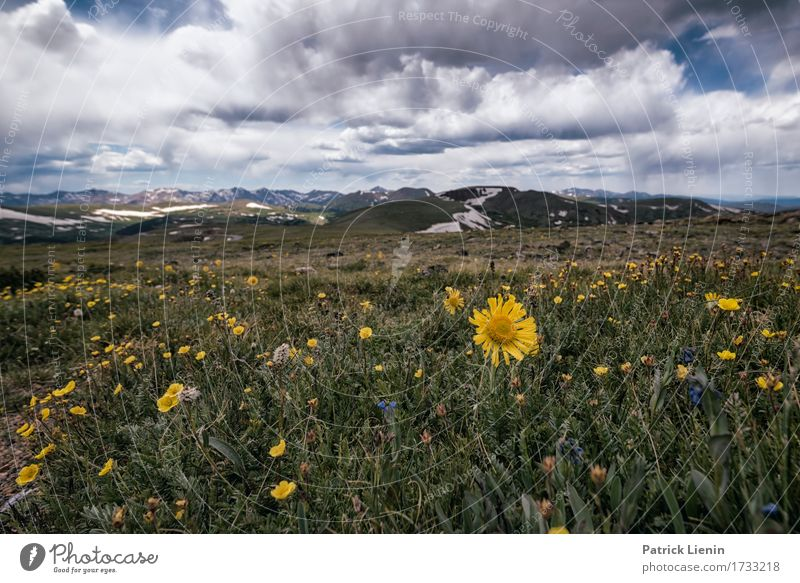 Alpen Sonnenblume Sky Nature Vacation & Travel Plant Blue Summer Beautiful Flower Landscape Clouds Mountain Environment Lanes & trails Meadow Lifestyle Natural