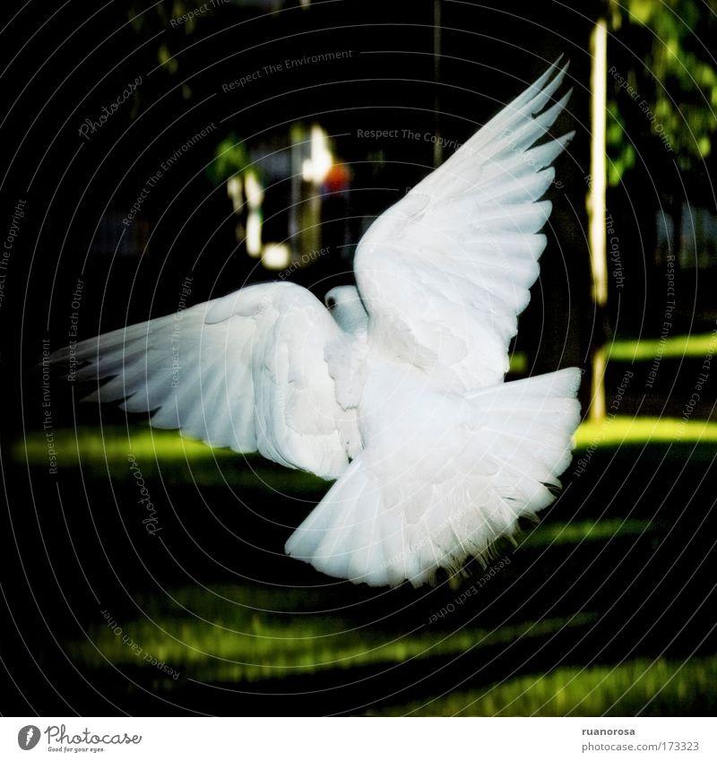 Animal Life Movement Contentment Bird Elegant Pure Serene Wild animal Pigeon
