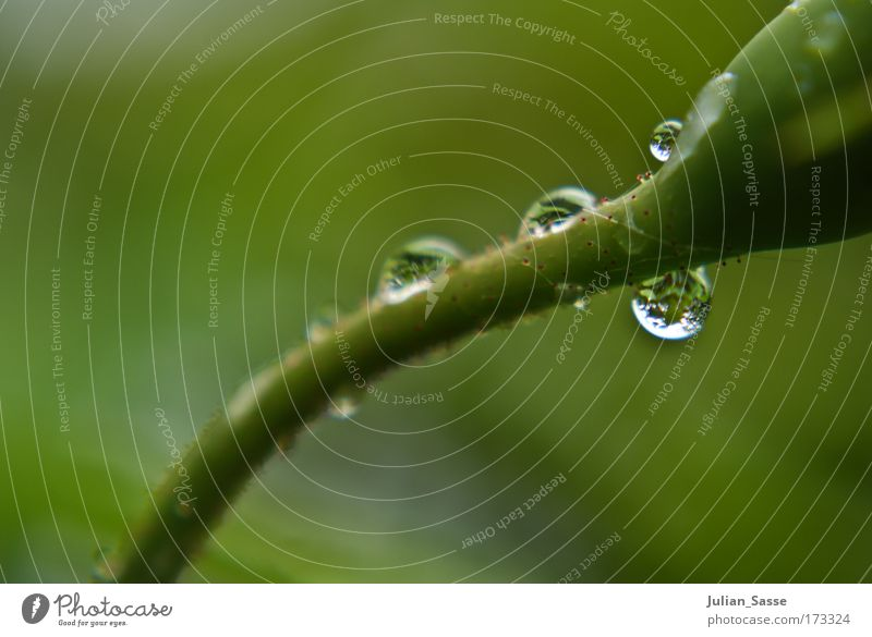 drops Colour photo Close-up Detail Macro (Extreme close-up) Long shot Plant Esthetic Drop tart Blur Green