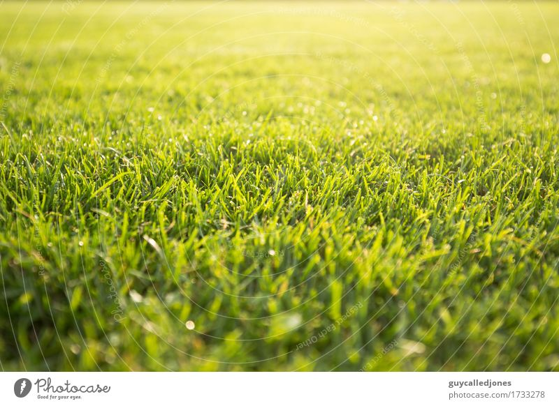 Green Relaxation Calm Life Movement Sports Healthy Playing Health care Contentment Leisure and hobbies Fresh Speed Soccer Fitness Wellness