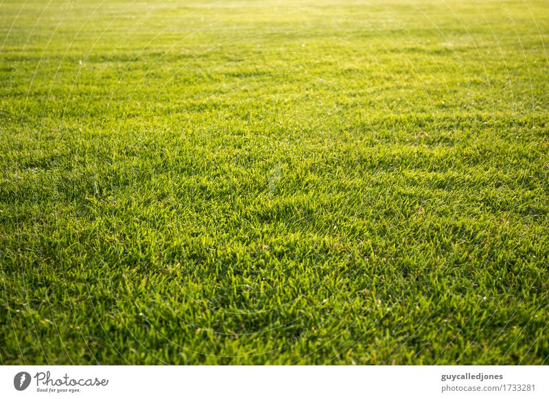 Green Relaxation Calm Life Natural Sports Healthy Playing Happy Leisure and hobbies Fresh Speed Soccer Fitness Wellness Well-being