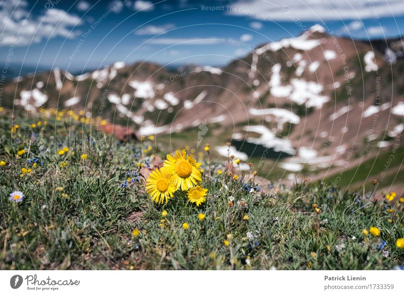 Sommerwiese Beautiful Vacation & Travel Tourism Adventure Summer Snow Mountain Hiking Environment Nature Landscape Plant Elements Sky Clouds Flower Grass Park