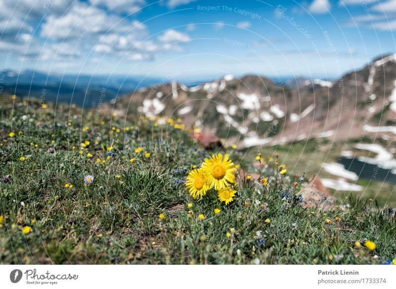 Alpine Sunflower Sky Nature Vacation & Travel Plant Summer Beautiful Green White Flower Landscape Clouds Mountain Environment Meadow Natural Grass