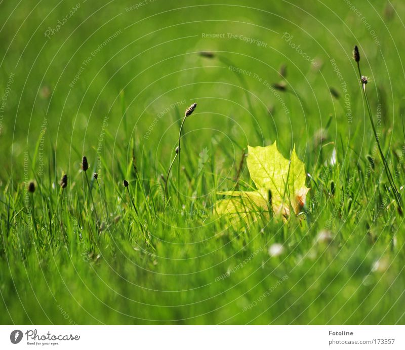 Lonely leaf Colour photo Exterior shot Day Light (Natural Phenomenon) Sunlight Environment Nature Landscape Plant Earth Spring Summer Beautiful weather Warmth