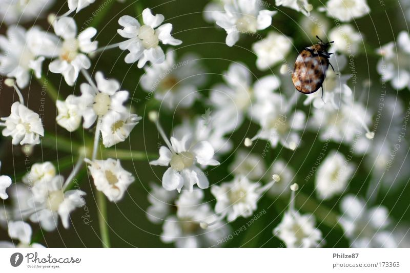 Swarmless Colour photo Exterior shot Day Shallow depth of field Nature Plant Flower Blossom Foliage plant Wild plant Animal Wild animal Beetle 1 Touch