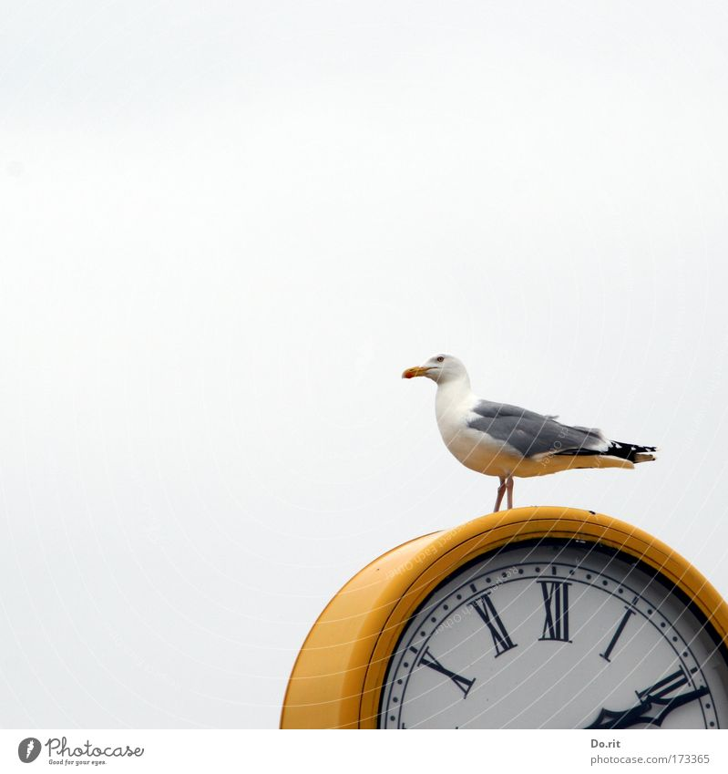 [KI09.1] 14:11 sharp. Time machine Measuring instrument Clock Air Sky Beach Baltic Sea Animal Bird Seagull Sit Wait Yellow Gray White Clock hand Feather