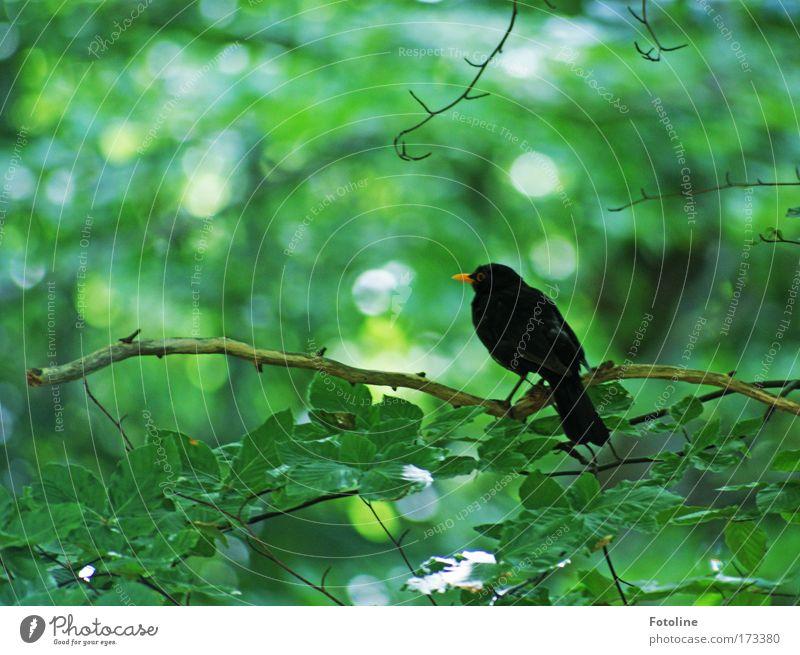 Nature Tree Sun Green Plant Summer Leaf Black Animal Forest Spring Bright Bird Environment Free Wild