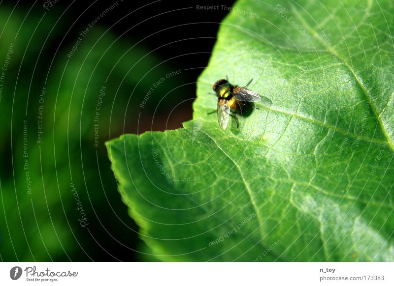 Hello McFly!!! Colour photo Exterior shot Close-up Nature Plant Animal Summer Beautiful weather Leaf Foliage plant Meadow Brook 1 Flying Growth Small Patient