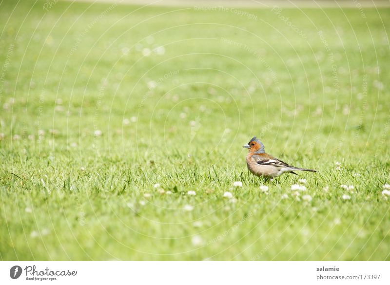 Nature Calm Loneliness Animal Meadow Grass Freedom Bird Environment Natural Wild animal
