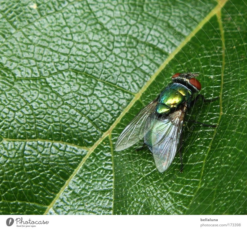 I'll throw myself away! :mrgreen: Nature Plant Ivy Leaf Foliage plant Wild plant Joie de vivre (Vitality) Bravery Self-confident Fly Blowfly Insect Dazzling