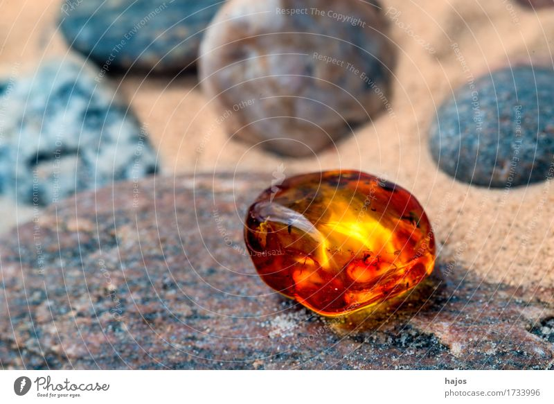 Amber at the Baltic Sea beach Alternative medicine Medication Beach Stone Old Illuminate Yellow Gravel Sandy beach Resin Brilliant Precious stone