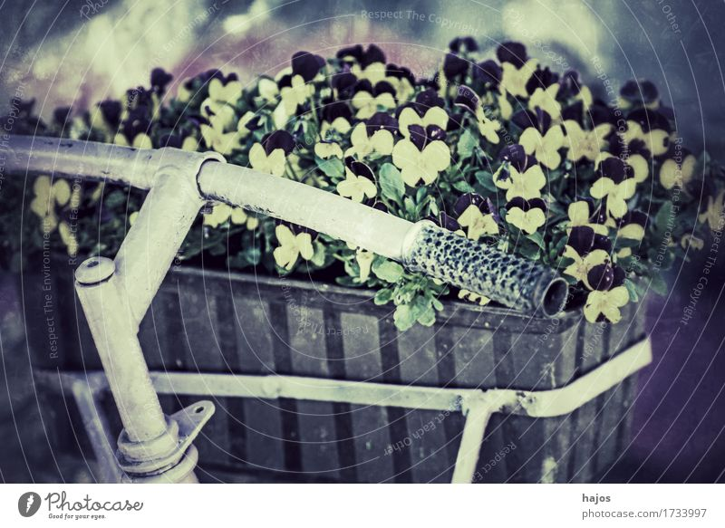 Bicycle with flower box in retro style Beautiful Decoration Flower Old Friendliness Retro Trashy Blue Romance Nostalgia Past Window box Pansy Still Life colored