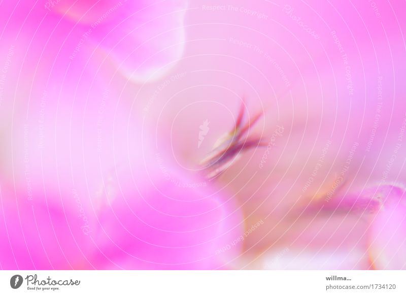 delicately sparkling Plant Flower Blossom leave Pistil Soft Pink Watercolors Fragrance Fragrant Smooth Dreamily Delicate Pastel tone Colour photo Exterior shot
