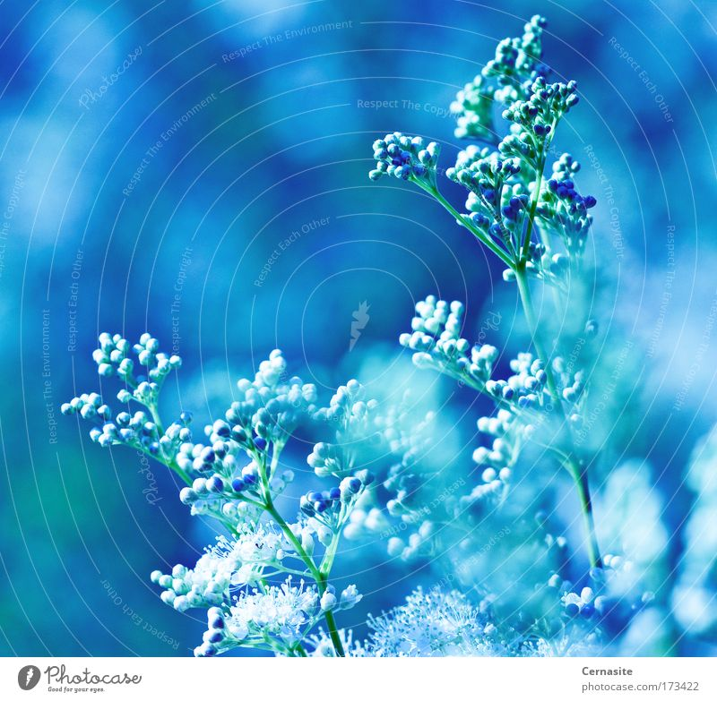 Need to Feel Sky Nature Blue White Green Beautiful Plant Summer Flower Environment Landscape Meadow Cold Warmth Coast Blossom