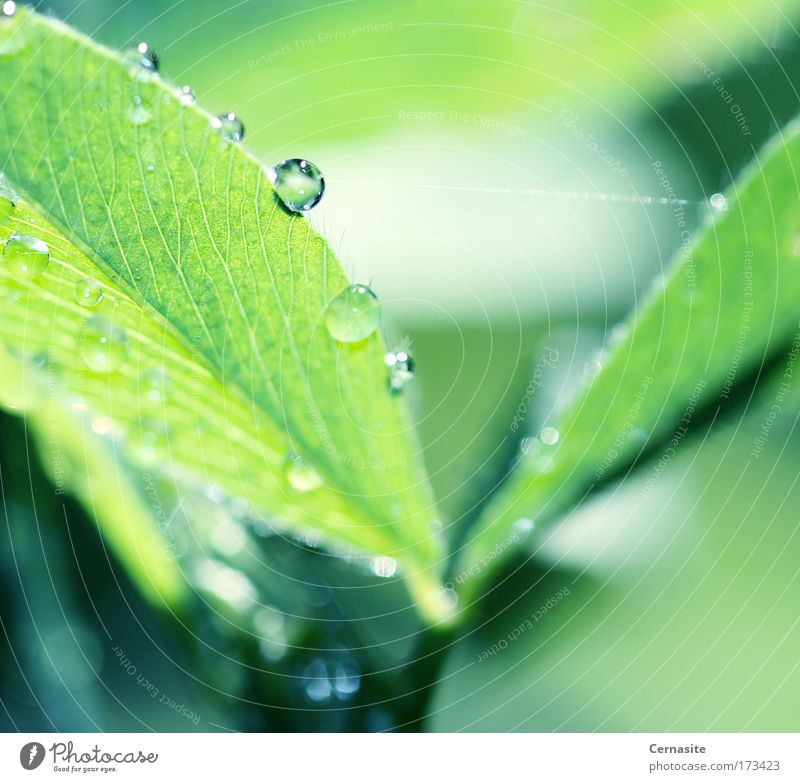 Mindfields I Nature Green Beautiful Plant Summer Leaf Environment Meadow Warmth Grass Coast Field Wild Elegant Fresh Drops of water