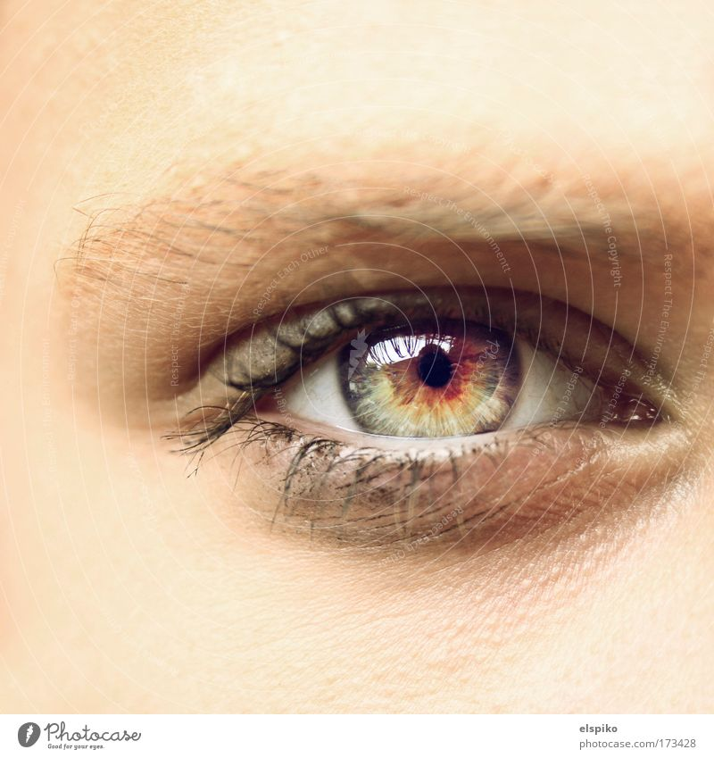 Human being Beautiful Eyes Feminine Bright Skin Esthetic Reflection Macro (Extreme close-up) Eyelash Eyebrow Pupil Iris Face