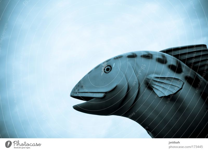Sky Blue Animal Cold Large Fish Fantastic Zoo Trashy Dry Sculpture Breathe Aquarium Fishing (Angle) Environmental pollution Sky blue