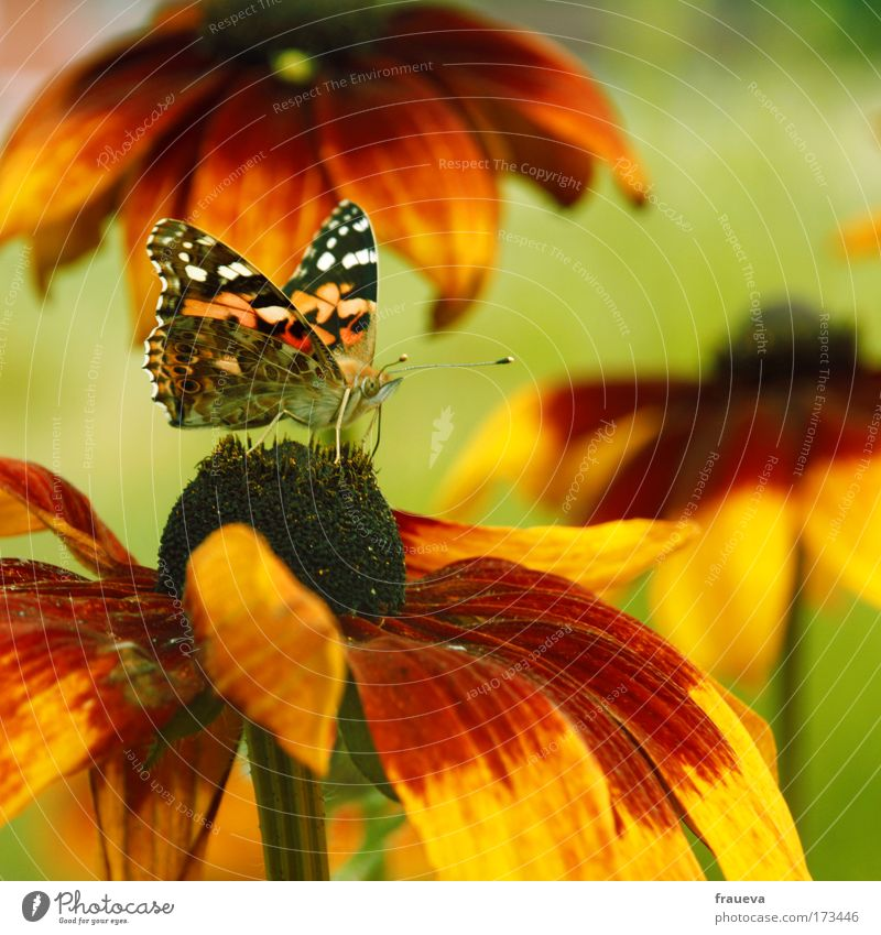 Nature Flower Green Red Summer Animal Yellow Blossom Butterfly Blossoming Beautiful weather