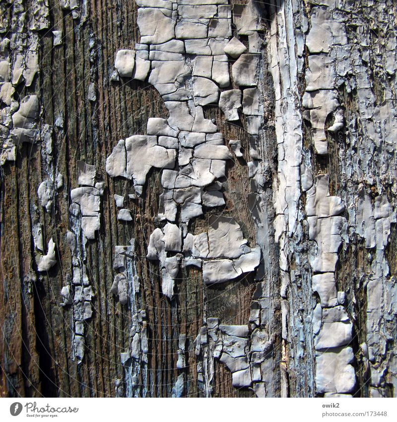 Old Blue White Beautiful Wood Gray Art Brown Door Dirty Natural Design Broken Change Transience Dry