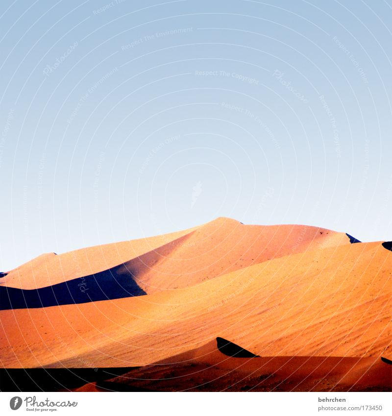 *100* years of loneliness* Vacation & Travel Far-off places Freedom Safari Nature Landscape Sand Cloudless sky Beautiful weather Desert Sossusvlei Namibia
