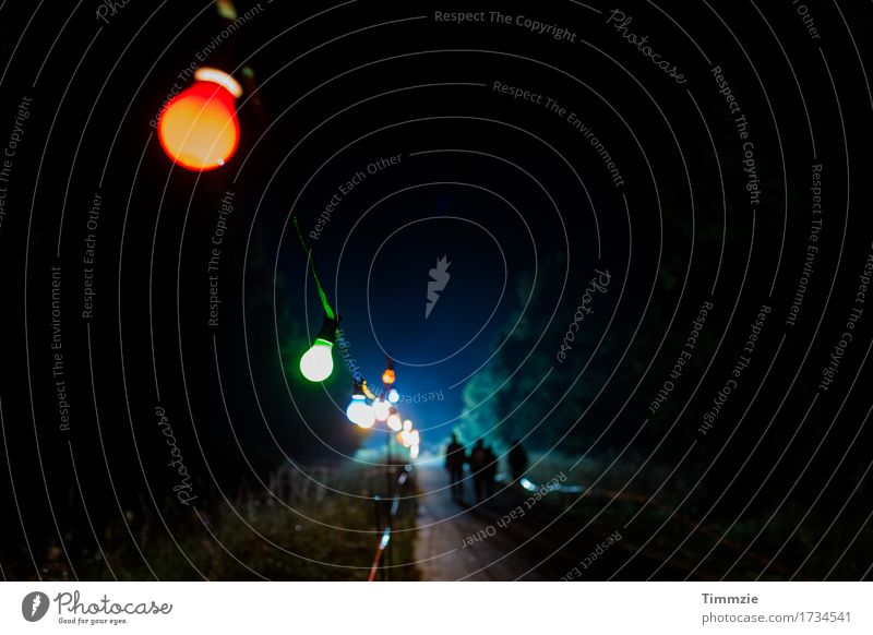 Nature Joy Forest Happy Art Freedom Party Lamp Friendship Leisure and hobbies Culture Shows Event Concert Electric bulb Night sky