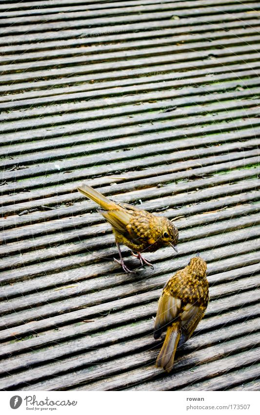 chit-chat Colour photo Exterior shot Copy Space top Copy Space middle Animal Bird Wing 2 Small Yellow Graceful Feather Wood Wooden floor Baby animal