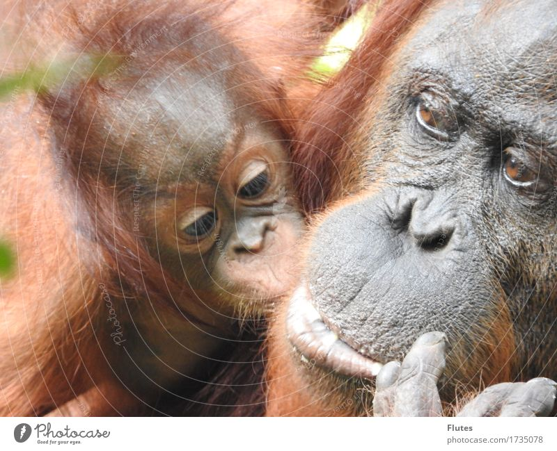 Borneo Animal Wild animal Animal face 2 Baby animal Animal family Emotions Trust Safety Protection Safety (feeling of) Warm-heartedness Sympathy Together Love